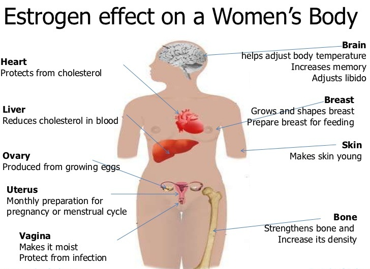 Does estrogen increase sex drive