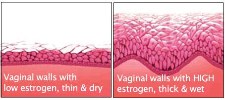 vaginal_walls_estrogen_1