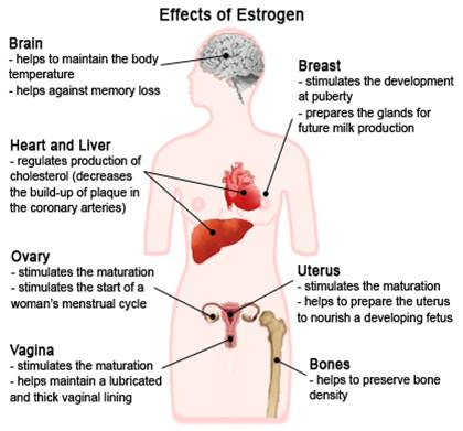 The complete effects of Estrogen in the body
