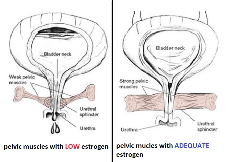 weak_strong_vaginal_muscle
